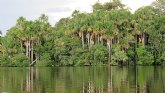 Hallan altos niveles de plomo en sangre en población indígena de la Amazonía peruana