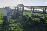 Antonio Luengo confía en que la campaña de melón en la Región de Murcia supere las 220.000 toneladas