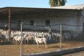 Acuerdan la nueva puesta en marcha del Consejo Asesor Agrario y Ganadero de Totana