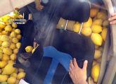 La Guardia Civil desmantela un grupo delictivo dedicado a la sustracci�n de limones en el Valle del Guadalent�n