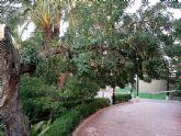 La ca�da de ramas de un algarrobo en La Cubana obliga a su tala parcial