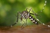 Un equipo de la UOC desarrolla una tecnología para identificar mosquitos tigre