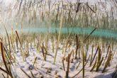 El Parque Regional Salinas y Arenales de San Pedro del Pinatar celebra el ´mes de la posidonia´ con información ´online´ sobre esta planta marina