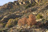Tala de pinar seco en la sierra de La Muela
