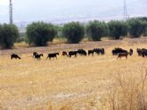 Se convoca el procedimiento para adjudicar los aprovechamientos de pastos de los montes de utilidad p�blica del Ayuntamiento