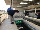 El humedal de la depuradora de Los Alcázares desnitrificará el agua a un mejor precio y de manera más sostenible
