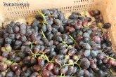 Las exportaciones de uva de la Región crecen un 32 por ciento en los últimos cinco años