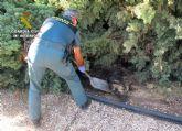 La Guardia Civil esclarece el uso ilícito de veneno en un coto de caza de Moratalla