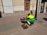 STV GESTIÓN repone este otoño más de 1.000 plantas de flor en calles y plazas del municipio de Torre Pacheco