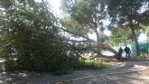 El viento provoca ca�das de �rboles y ramas sin consecuencias