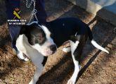 La Guardia Civil detiene al propietario de dos perros de raza peligrosa que atacaron a un vecino
