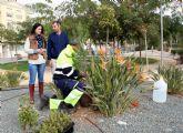 El Ayuntamiento de Puerto Lumbreras plantará cerca de 700 árboles y plantas forestales en parques y jardines del municipio