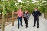 Mazarrón acoge las primeras jornadas agrícolas sobre cultivos subtropicales