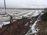 COAG Murcia considera insuficientes y arbitrarias las rebajas fiscales para los cultivos dañados por la gota fr�a de diciembre y otras inclemencias climatol�gicas en 2016