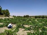 Los vinos DOP Jumilla reconocidos en las catas de primavera de la publicación the drink business