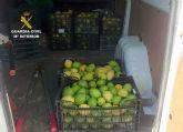 La Guardia Civil esclarece la sustracción de dos toneladas de limón con nueve detenidos