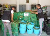 La Guardia Civil desmantela dos invernaderos con 9.000 plantas de marihuana