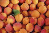 Agroseguro presenta en la Región de Murcia las novedades del seguro de frutales