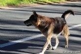 Agentes de la Polic�a Local recuperan un perro perdido en el paraje de La Santa y consiguen localizar a su propietario para entreg�rselo