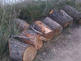 IU-Verdes denuncia una nueva tala de pinos y especies protegidas en el 'paraje del Argaz'