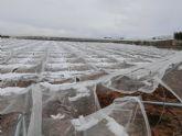 Agricultura remite el Ministerio el informe de daños en los cultivos por incidencias climatológicas adversas del pasado año