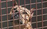 La Junta Local de Gobierno tramita, en su �ltima sesi�n, cuatro licencias para la tenencia de animales potencialmente peligrosos