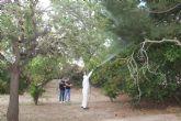El Ayuntamiento realiza labores de fumigación para eliminar mosquitos en parques y jardines