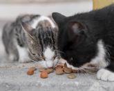 El Ayuntamiento lleva a cabo un Plan de Gestión de las Poblaciones Felinas Urbanas