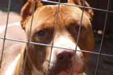 El Ayuntamiento de Totana tramita en lo que va de año ocho expedientes de licencia para la tenencia de animales potencialmente peligrosos
