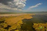 ANSE y WWF piden responsabilidad al Gobierno de la Región de Murcia a la hora de cumplir la normativa para la recuperación del Mar Menor