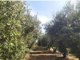 Alianza entre Vytrus Biotech e IRTA para la investigación y preservación del olivo en Cataluña