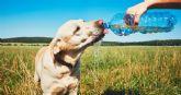 Claves para cuidar a las mascotas en verano