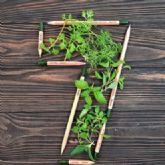 Sprout World cumple 7 años con 30 millones de lápices plantables vendidos en 80 países
