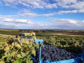 Termina en Bodegas Vilano una de las vendimias más excepcionales de los últimos tiempos