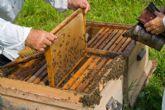 Agricultura, Pesca y Alimentación convoca subvenciones para proyectos de investigación aplicada en el sector apícola