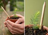 Sprout World presenta la edición Á�rbol de Navidad de sus lápices plantables