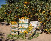 Naranjas Lola comienza su nueva campaña de cítricos con importantes novedades