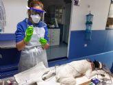 El Hospital Veterinario Guadiamar recoge muestras para investigar la exposición al Covid-19 en mascotas