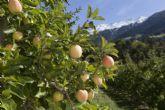 La manzana, un bocado de salud respetuoso con el medio ambiente, según Val Venosta