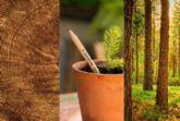 Sprout World celebra hoy 30 de marzo el Día Internacional del Lápiz que cumple ms de 450 anos