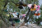 Se prohibe el vuelo de palomas no destinadas a la práctica deportiva durante la celebración de entrenamientos y competiciones oficiales de colombicultura