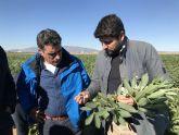 L�pez Miras: Los daños por las heladas en la Regi�n de Murcia pueden superar las 6.500 hect�reas y los dos millones y medio de euros