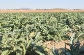 ASAJA Murcia estima que el fr�o ha dañado duramente a m�s del 40% de las hortalizas del Guadalent�n