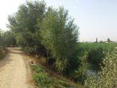 El Ministerio de Agricultura y Pesca, Alimentación y Medio ambiente recuperará cuatro kilómetros del río Segura a su paso por Molina de Segura