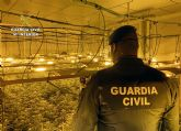 La Guardia Civil desmantela una importante plantación de marihuana en una nave industrial de Cieza