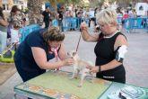 Numeroso p�blico disfruta del elevado nivel de participaci�n en el vi concurso nacional canino de Mazarr�n