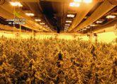 La Guardia Civil desmantela un grupo criminal de ámbito internacional dedicado al cultivo intensivo de marihuana