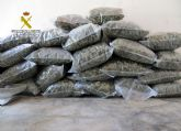 La Guardia Civil desmantela en Pliego una instalación dedicada al cultivo intensivo de marihuana