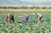 COATO aumenta en un 40% la producci�n de col picuda, que esta campa�a destaca por su calidad