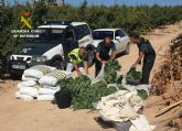 La Guardia Civil desmantela una plantación con más de 2.000 plantas de marihuana en Ulea